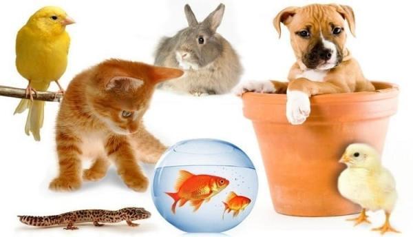 پرورش حیوانات پردرآمد؛ پرورش چه حیواناتی سودآورتر است؟